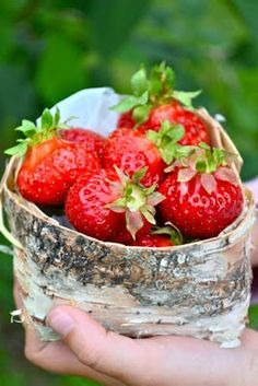 Mansikat - Finnish strawberries are the sweetest in the world. Eat Fruit, Fruit And Veg, Strawberry Fields Forever, Strawberry Patch, Love Eat, The Fresh, Summer Time, Berries, Food And Drink