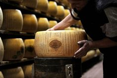 FLORENCE, Italy—Parmesan cheese and other beloved Italian food exports give the issue of genetically modified organisms (GMO) in Italy international breadth. Though GM crops are banned from Italian fields, much of the country's livestock is fed with GM soy imported from Brazil and Argentina.