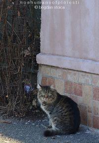 NON-humans of Ploiesti - Ai vazut-o vreodata? Mai, Animals, Animales, Animaux, Animal, Animais, Dieren