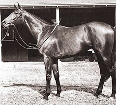 Buckpasser. Impeccably conformed, statuesque horse at 17.1 hands. Grandson of War Admiral and Damsire of Easy Goer. 1967 Horse of the Year
