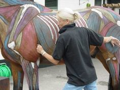 Courses on Equine Massage