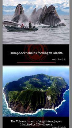 Weird World, Alaska, Whale, Japan, Island, Weird, World, Whales, Islands