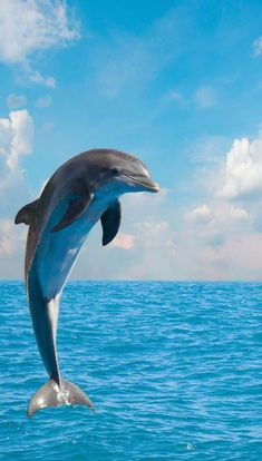I pitched the idea that SpongeBob and Patrick learn a swearword. I couldn't even use a bleep. So I used a dolphin sound instead. Beautiful Sea Creatures, Animals Beautiful, Photo Dauphin, Cute Baby Animals, Animals And Pets, Strange Animals, Dolphin Photos, Dolphin Tale, Baby Dolphins