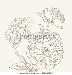 Peony isolated brown on beige background. Spring flowers vector illustration.