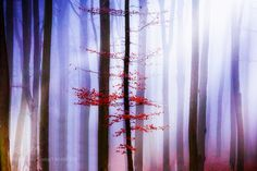 Mystical Forest by jeso #Landscapes #Landscapephotography #Nature #Travel #photography #pictureoftheday #photooftheday #photooftheweek #trending #trendingnow #picoftheday #picoftheweek