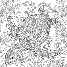 Turtle Coloring Page. Adult coloring book by ColoringPageExpress