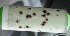 A Genius Trick To Keep Ticks From Biting You - Peppermint Oil & a Lint Roller