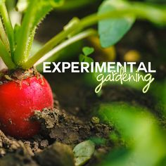 24 best greenstalk gardens images on pinterest gardening tips our 2015 experiments greenstalk what greenstalk is growing at their offices in knoxville solutioingenieria Images
