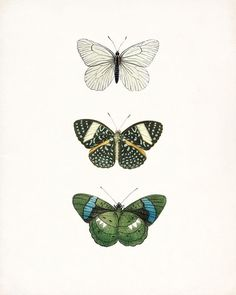 Vintage Green Butterfly Collection Natural by HighStreetVintage,