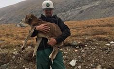 While the pup had lost 64 pounds during her ordeal on Mt. Boss, Chloe was finally rescued by some determined hikers and brought to safety.