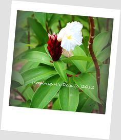 White flower Taken at Labrador Park #Dominique's Desk
