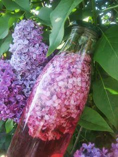 Créer vos produits naturels : simple et pas cher !: Macérât vinaigré de lilas