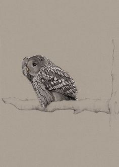 Birds Illustrations by Janja Baznik, via Behance #owl