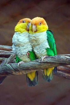 Love Birds ~ Photos Hub