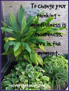 Mindful Monday – Mindfulness is Awareness | Silver Threading