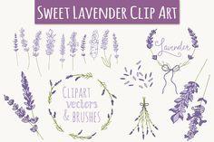 Lavender Clip Art & Vectors by The Pen & Brush on Creative Market