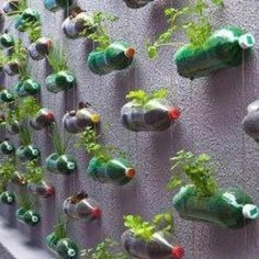 Hanging recycled herb garden!!!!!!!! Possibilities are endless