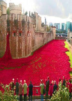 Amapolas Rojas en todo el foso en la Torre de Londres Google+