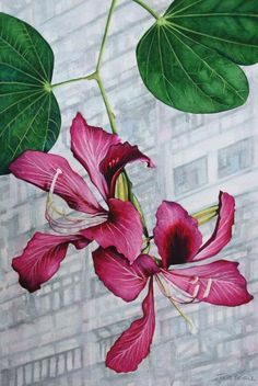 Flower Paintings - Hong Kong Orchid Tree Bauhinia Blakeana - Watercolour