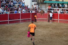 Wrestling, Sports, Cows, Lucha Libre, Hs Sports, Excercise, Sport, Exercise