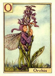 Orchis Flower Fairy » Flower Fairy Prints- Vintage Fairy Prints by Cicely Mary Barker for sale