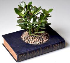 o mais divertido é escolher o livro para a base, combinando com a planta ou com o ambiente em que ficará.