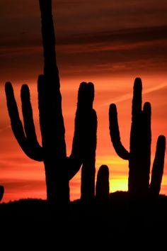 USA- Arizona sunrise
