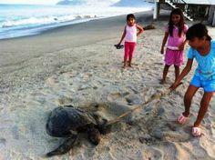Aprueba la Federación un proyecto para proteger a las tortugas en Tecpan: Uagro - http://www.tvacapulco.com/aprueba-la-federacion-un-proyecto-para-proteger-a-las-tortugas-en-tecpan-uagro/