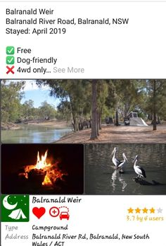 NSW Camping Spots, New South, Free Dogs, South Wales, Dog Friends, River, Outdoor Decor, Rivers