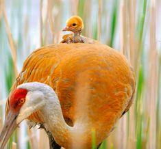 20 Heartwarming Photos Of Animal Parents And Their Babies -