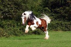 immagini di cavalli di tutte le razze - Cerca con Google