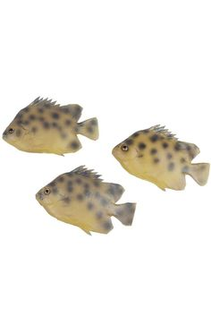 Pack of 6 Artificial Clingfish Lifelike and Realtouch PU Fish for Fish Tank or the Aquarium Restaurant Hotel Display >>> Check out this great product.