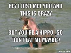 Hey i just met you and this is crazy, but you're a hippo...so dont eat me maybe?