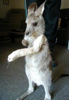 This kangaroo with a broken arm thinks you'd have a better chance of finding someone if you'd just have the confidence to put yourself out there.