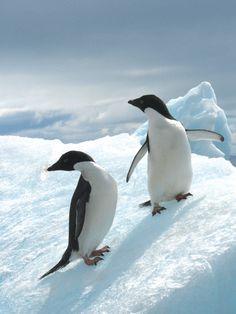 Antarctica penguin #monogramsvacation