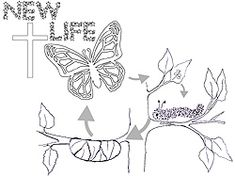 caterpillar to butterfly life cycle image coloring page discussion sheet broadly graded from k to grade and learn about the butterfly which is a church - Catholic Coloring Pages Easter