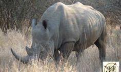 Big 5 Kruger Park Safari Tour.Rhino, http://www.34southtours.com/big-5-kruger-park-safari-tour.php