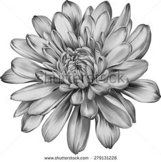 Chrysanthemum Flower Outline for Jacob's tattoo Tattoos Skull, Black Tattoos, Body Art Tattoos, Small Tattoos, Sleeve Tattoos, Tatoos, November Birth Flower, Birth Month Flowers, Mandala Flower