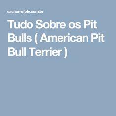Tudo Sobre os Pit Bulls ( American Pit Bull Terrier )