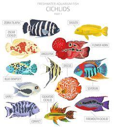 Colorful Fish, Tropical Fish, Betta Fish Tank, Fish Tanks, Cichlid Fish, Fish Breeding, Fish Icon, Cool Fish, Fish Care