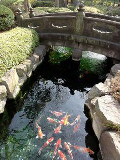 Japanischer Teich in Tokyo, Japan