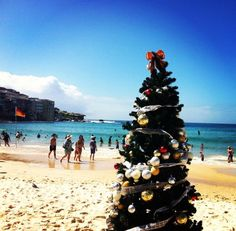 Australia - A Typical Aussie Christmas - Sun, Sand, Cold Beer and Shrimps. Not a snowman in sight! Aussie Christmas, Australian Christmas, Summer Christmas, Christmas Gift Guide, All Things Christmas, Christmas Trees, Merry Christmas, Xmas, Australia Day