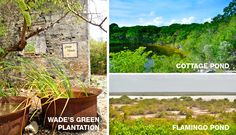 North Caicos - Cottage Pods, Flamingo Pond, Wade's Green Plantation