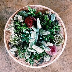 Succulent obsession!  #succulent #shoppigment #oneofakind #prettyplanting