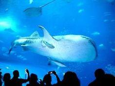 Coolest Aquariums Around the World - PelFind