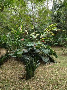 Botanical Gardens at du Plooy's lodge, Belize, March 2013