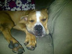 Estees pup.... Awww I love hims