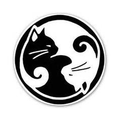 jing jang cats - Ecosia