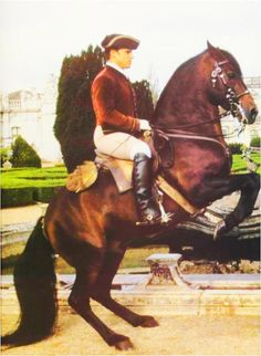 Alter-Real horse breed information including breed history, current status, usage, and pictures. Portuguese Royal Family, Conquistador, Happy Trails, Horse Breeds, Horse Stuff, Alters, Jumpers, Ponies, South America