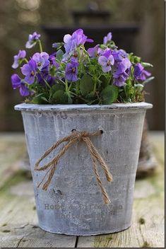 Creative Spring Garden Pots and Planters Spring Garden, Pretty Flowers, Plants, Pansies, Beautiful Flowers, Garden Containers, Flower Arrangements, Flower Pots, Planters